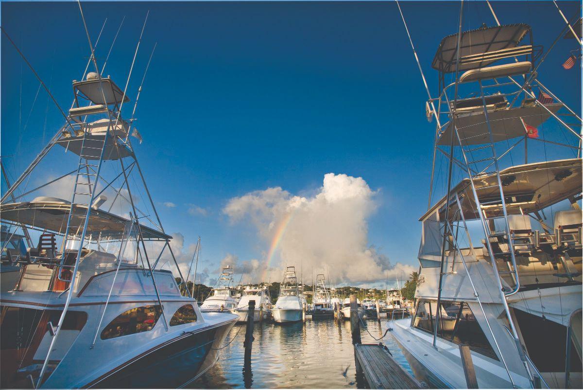 01-American Yacht Harbor-St Thomas Marina -Rainbow