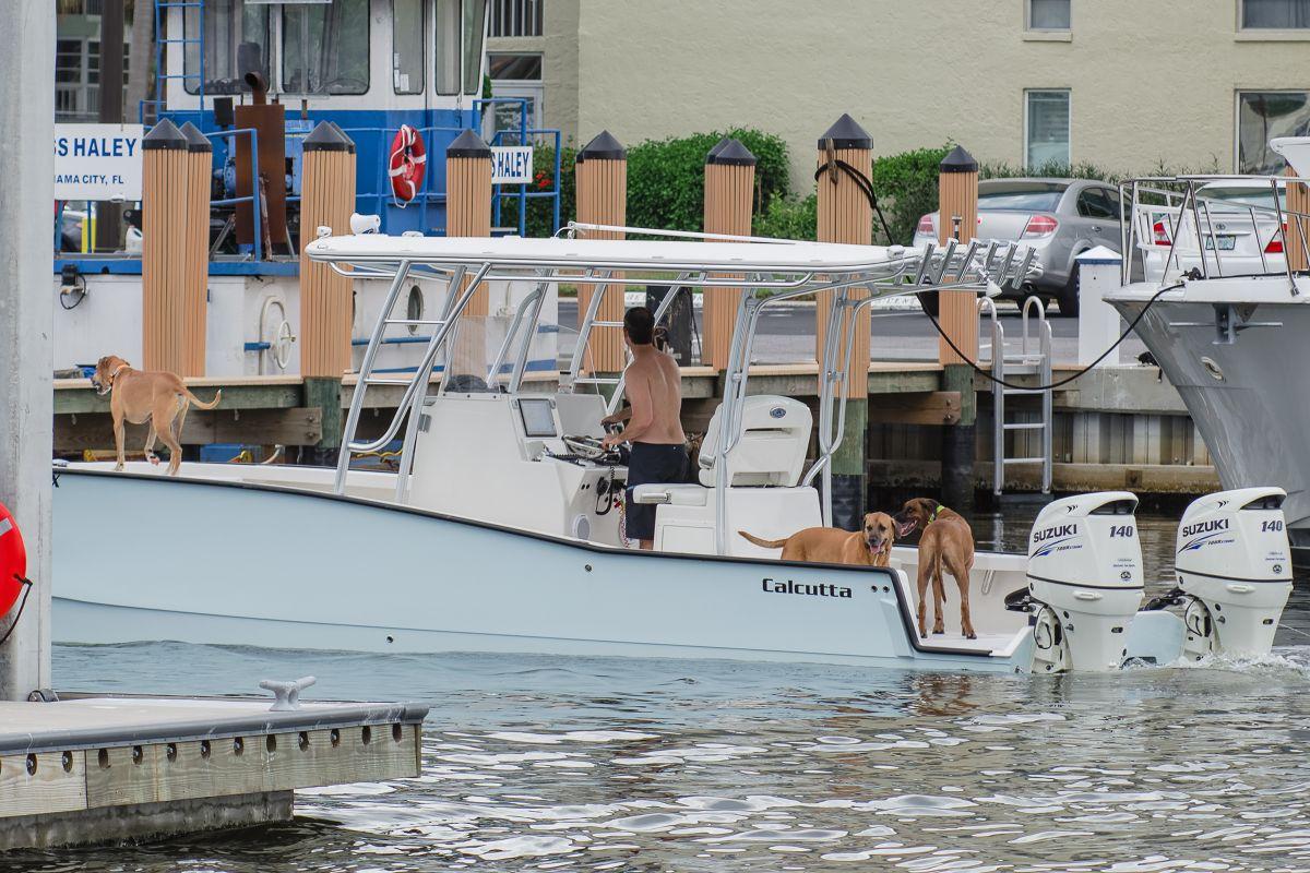 Maximo marina st petersburg marina and boatyard